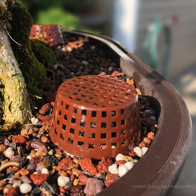 Bonsai Tree Care Fertilizer in Basket
