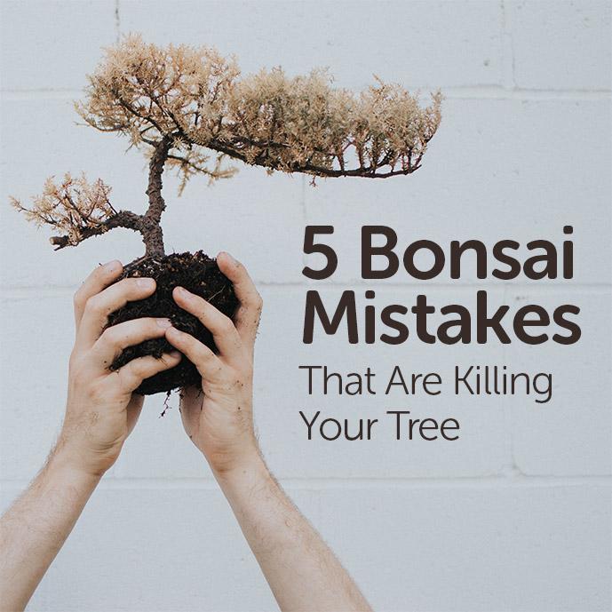 Bonsai Mistakes