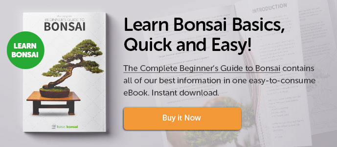Learn Bonsai Quick and Easy