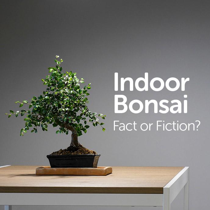 Indoor Bonsai - Fact or Fiction?