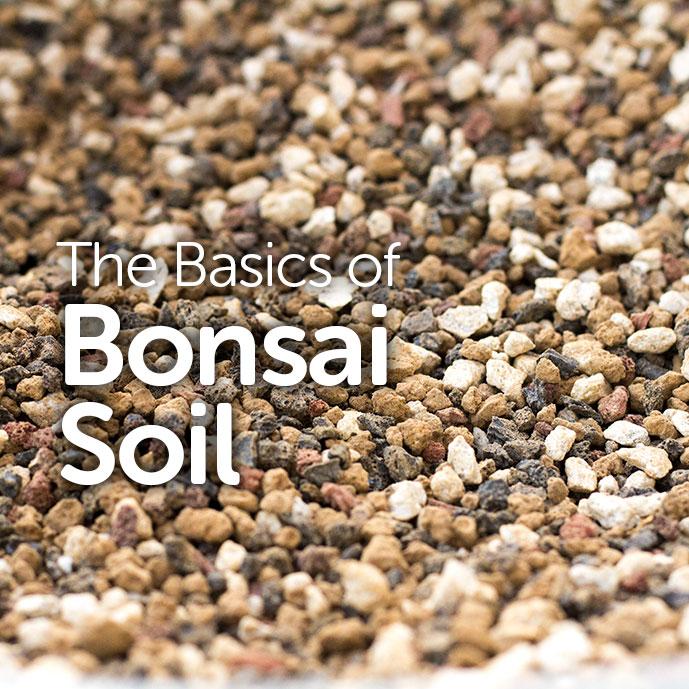 The Basics Of Bonsai Soil Basic Bonsai