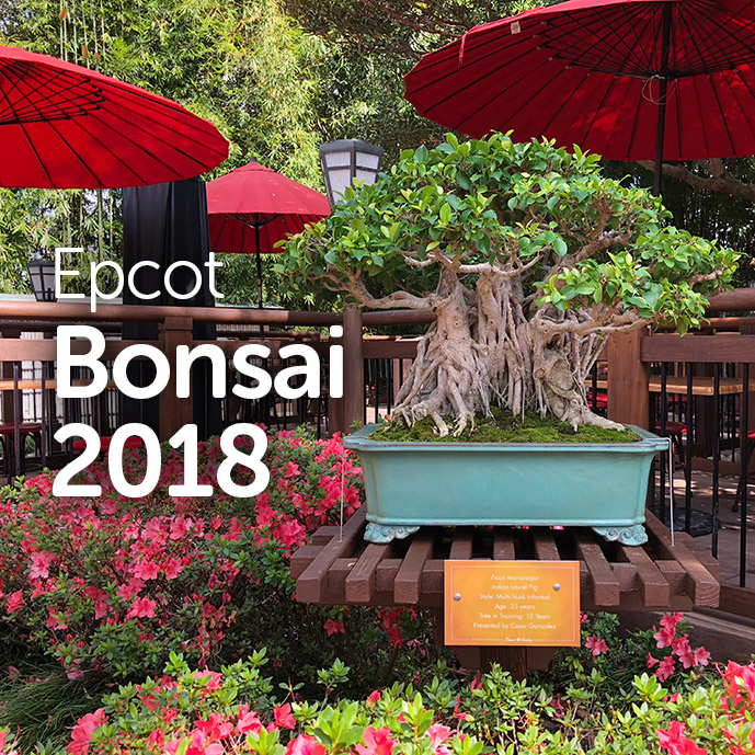 Epcot Bonsai
