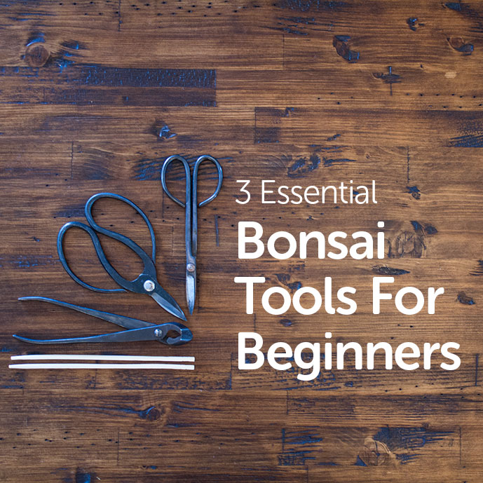 Bonsai Tools for Beginners