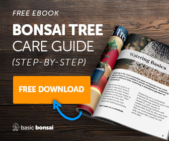 Free Bonsai Care eBook - Get Yours Now!