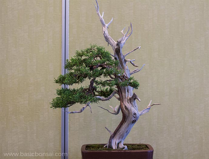 Juniper Bonsai Dead Wood
