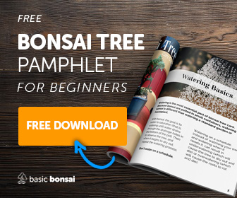 Free Bonsai Pamphlet - Get Yours Now!